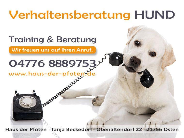 Verhaltensberatung Hund - Infos unter www.haus-der-pfoten.de/verhaltensberatung